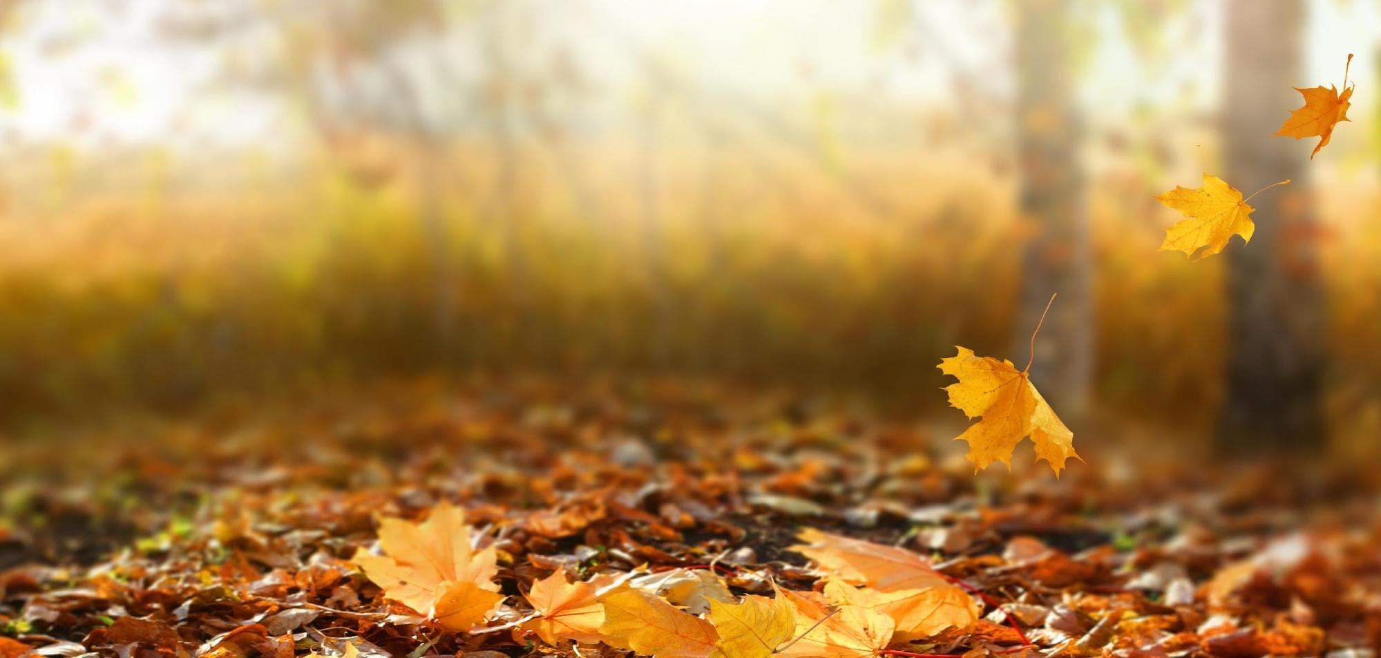 秋の一コマ | Air ~アリア~ - 楽天ブログ